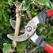 How to buy and maintain your pruning tools