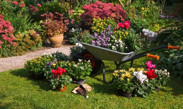 ¡Los arbustos que cultivan un huerto coloridos hacen un jardín!