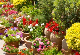 2 tips for managing colour in container gardens