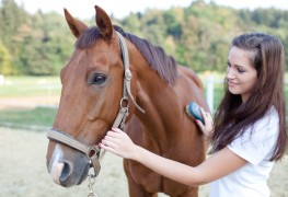 Pointers for proper horse grooming