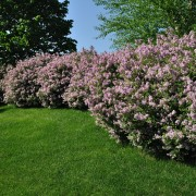 Gardening know-how: planting and caring for shrubs