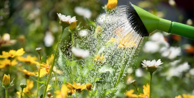 11 garden-watering basics