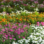 A handy guide for choosing garden plants