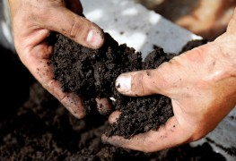 4 surprising household items you can compost
