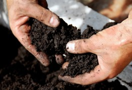 Balance your soil's pH level for a healthy garden