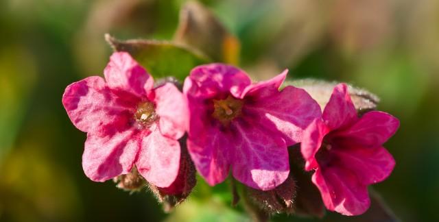 Green gardening: growing border carnations