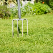 Unconventional lawn care advice that actually works