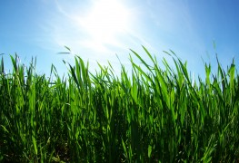 Use these 3 care-free grasses for the perfect lawn