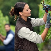 How to prune climbing roses and shrub roses