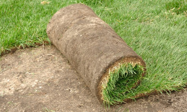 Tips on thatch, groundcover and sod