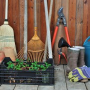 How to add red-hot poker to your garden