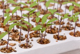 The excitement and potential of rooftop farming