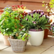 5 tricks gardeners use for healthier containers