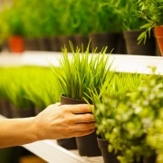 How to pick plants for your garden