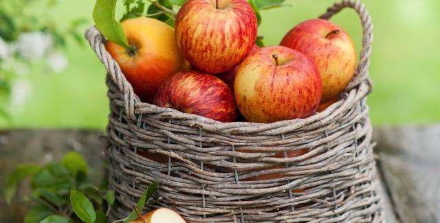 Apples have bushels of benefits