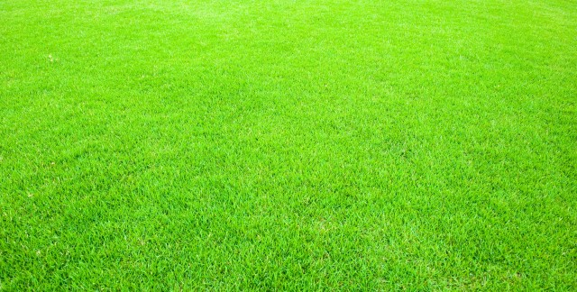 The homeowner's guide to tidy lawns