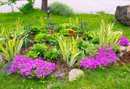 Create a stunning flower bed in 6 easy steps