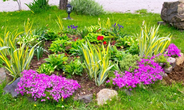 How to design and plan your dry soil garden
