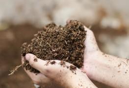 How feeling soil can help you grow a better garden