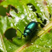 12 ways to deal with garden pests naturally
