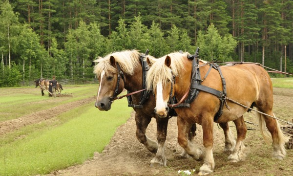 Smart tips for buying the right working horse