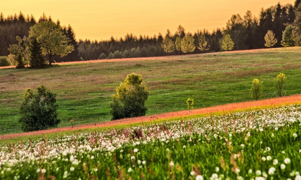 A few tips for creating a hillside meadow
