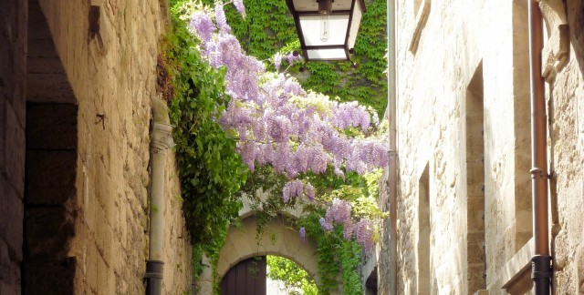 Clever tips for choosing and growing wisteria