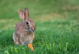 4 simple ways to get wildlife to visit your garden