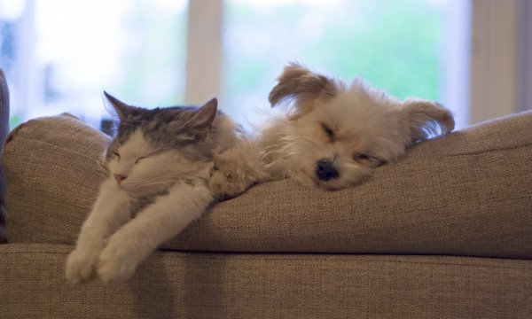 7 tips for worry-free travel with or without your pet