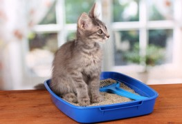 5 hints for making a dog-proof kitty litter box