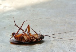 3 natural solutions for insect control