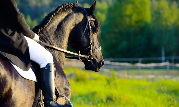How to safely prepare a horse for riding