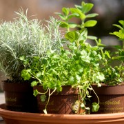 The easy way to grow herbs and seeds at home