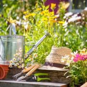 Simple guidelines for growing sweet pea vines