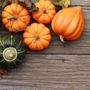 Green gardening: growing squash and pumpkin