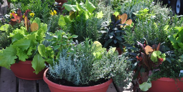 Potting-soil pointers for container gardens