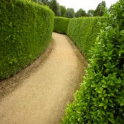 Gardener tricks for planting and pruning hedges