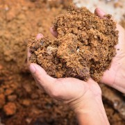A few benefits of composting in your home