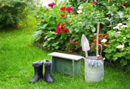 How to care for annuals and perennials all year round