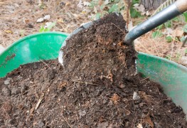 The benefits of compost tea for the garden