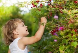 Green gardening: Growing currents