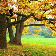 Choosing a tree for your yard: things to consider