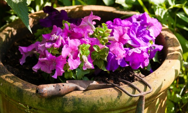 3 tips for starting and maintaining a colourful container garden
