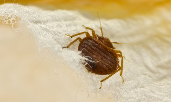 Everything about hotel bed bugs