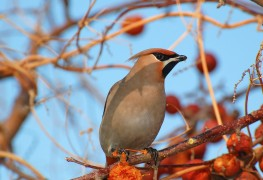 Defend fruit trees and gardens from wildlife