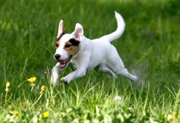 Keeping your dog healthy with exercise and play