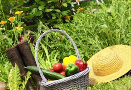 Basic tips for growing a delicious vegetable garden