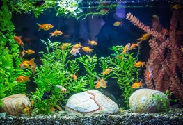 The benefits of gardening with aquaponics