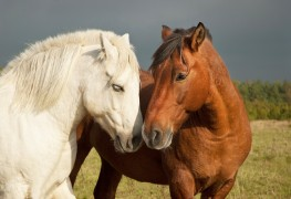 How to care for horses and other pets
