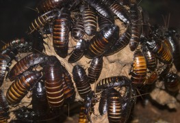 How to control earwigs and Japanese beetles in your garden
